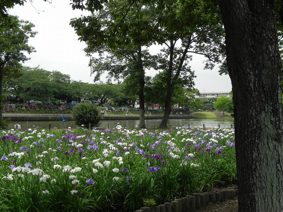 水元公園_c0187781_2254842.jpg
