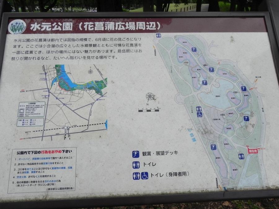 水元公園_c0187781_8112442.jpg