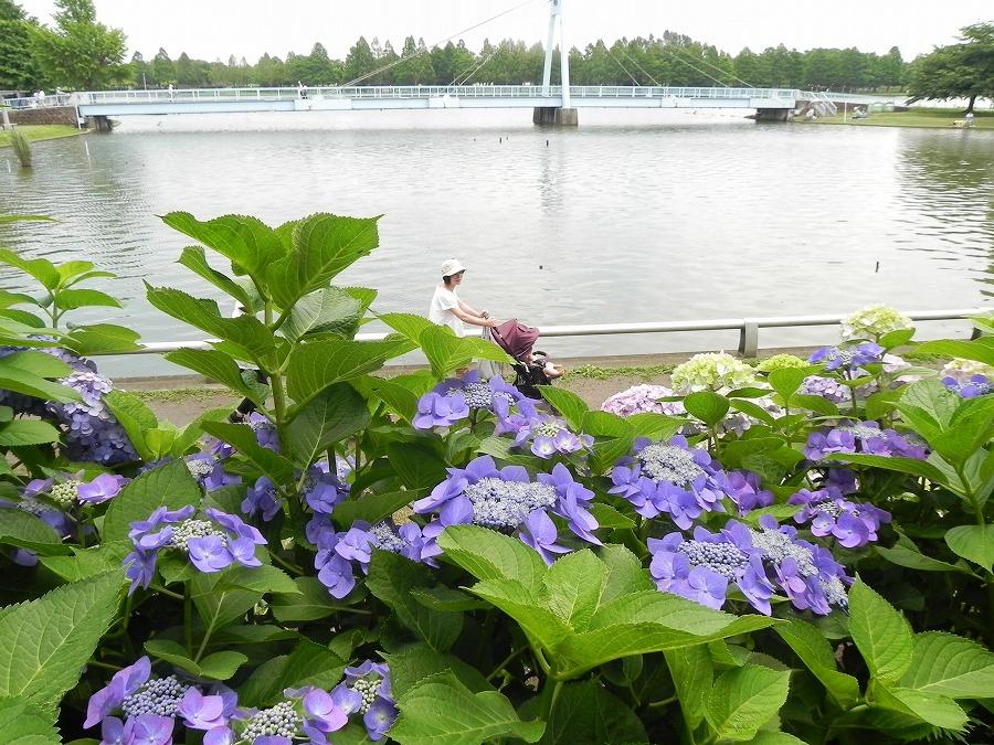 水元公園_c0187781_812397.jpg