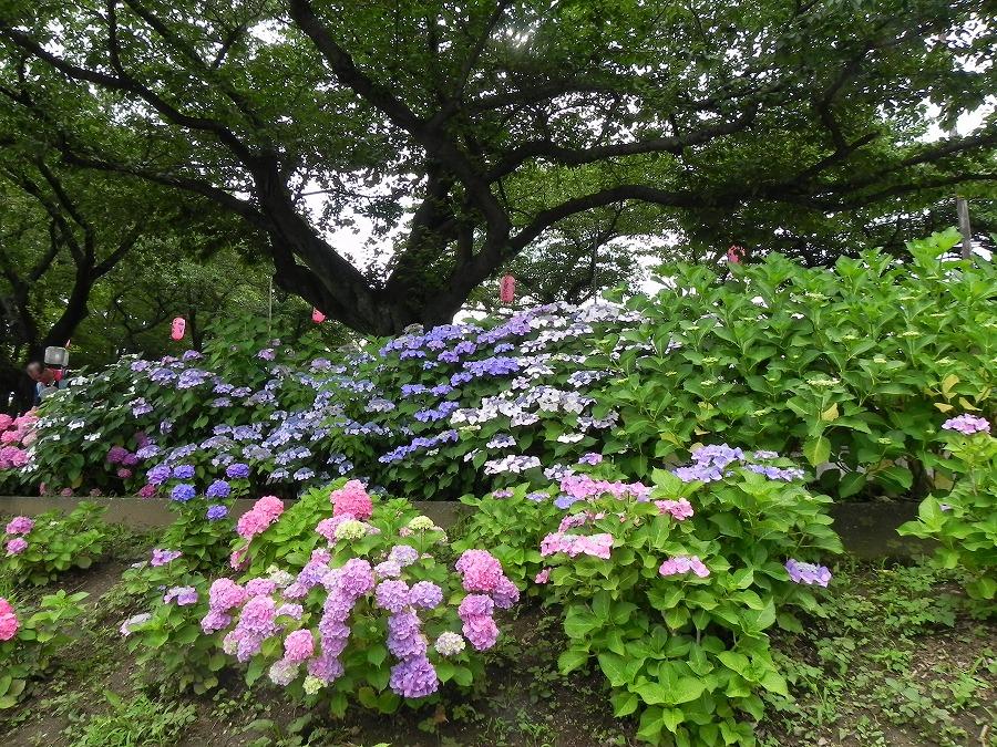 水元公園_c0187781_8163446.jpg