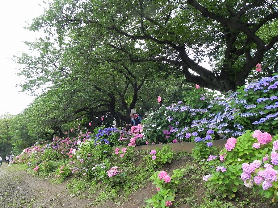水元公園_c0187781_817723.jpg