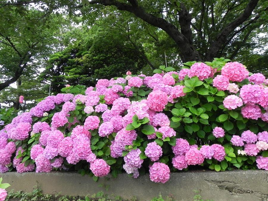 水元公園_c0187781_8183699.jpg