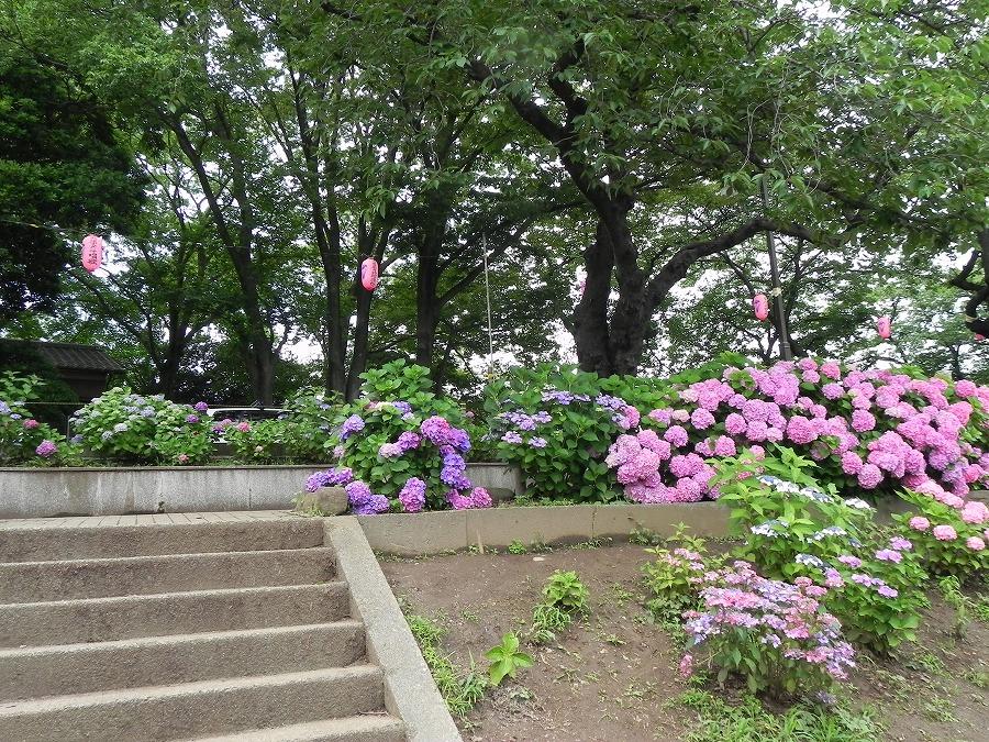 水元公園_c0187781_821408.jpg