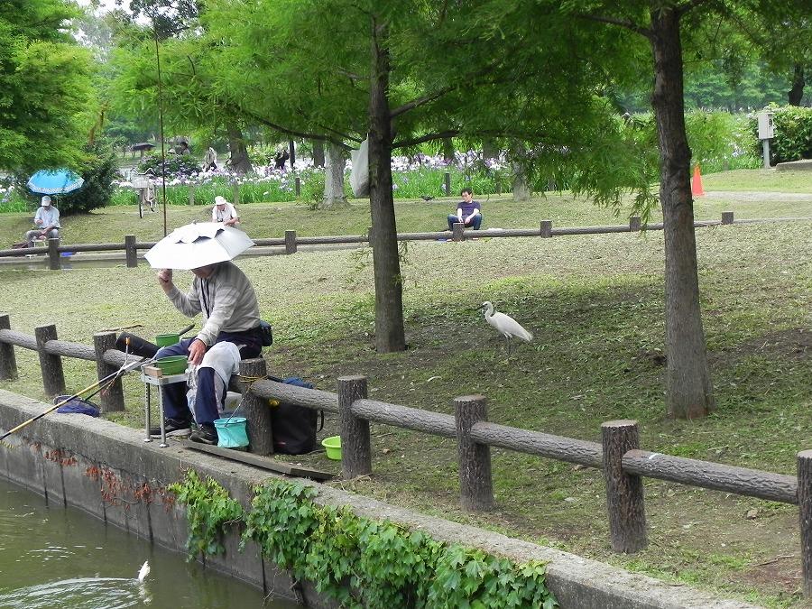 水元公園_c0187781_8232273.jpg