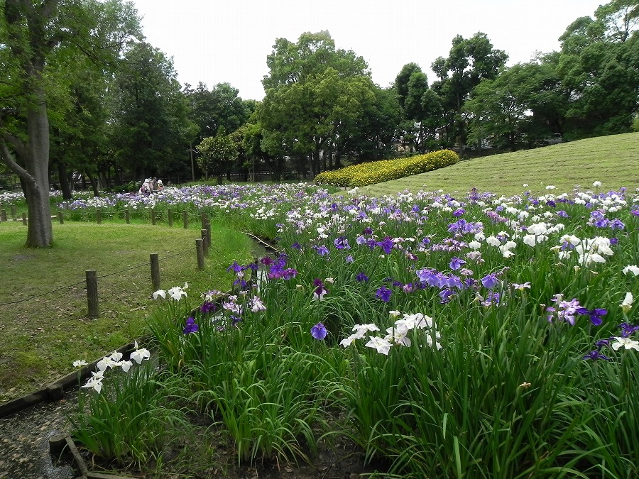 水元公園_c0187781_8255488.jpg
