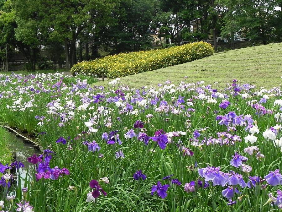 水元公園_c0187781_8261834.jpg