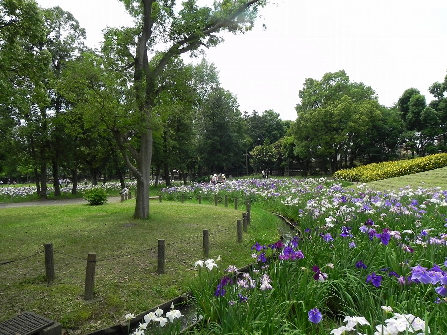 水元公園_c0187781_8265231.jpg