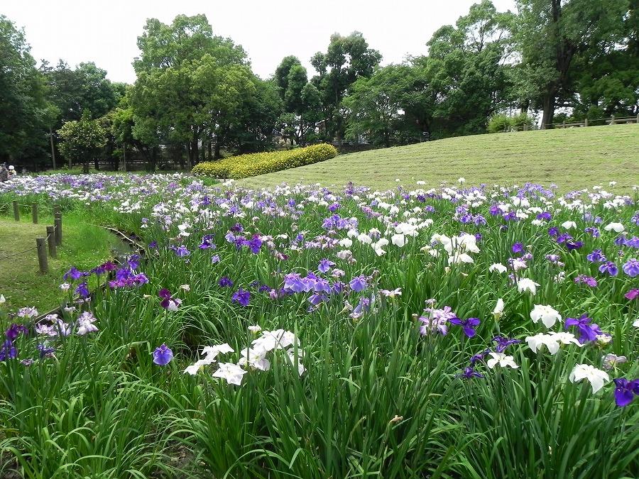 水元公園_c0187781_8272661.jpg
