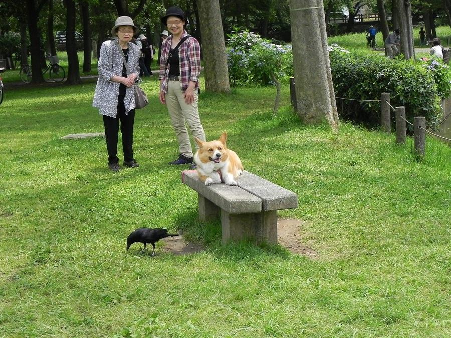 水元公園_c0187781_8361960.jpg