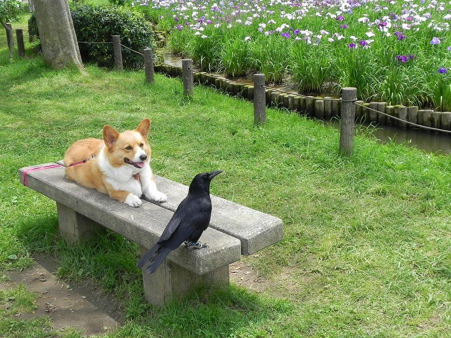 水元公園_c0187781_8415498.jpg
