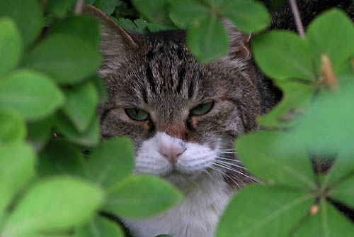 インドハマユウとラズベリー。ときどき猫_f0030085_20384214.jpg