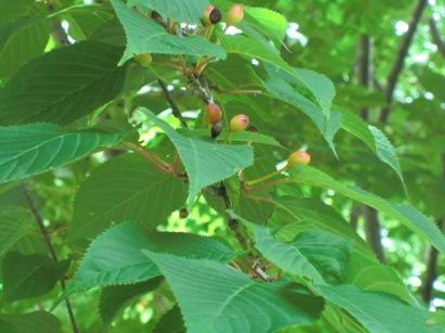 木の実_f0227395_16155013.jpg