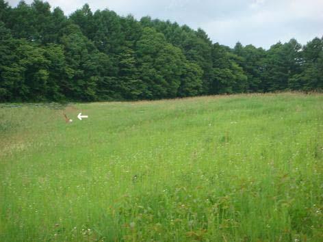 散歩中に鹿に遭遇_f0064906_18504247.jpg