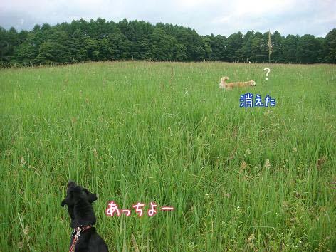 散歩中に鹿に遭遇_f0064906_18533080.jpg