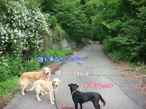散歩中に鹿に遭遇_f0064906_19223173.jpg