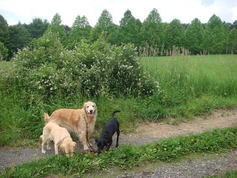 散歩中に鹿に遭遇_f0064906_1925988.jpg