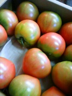 トマト美味しい_c0193720_1037381.jpg