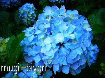 f0214121_2331466.jpg