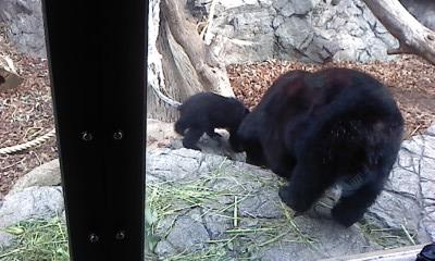 上野動物園にて_b0217741_21432376.jpg