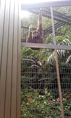 上野動物園にて_b0217741_2145294.jpg