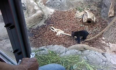 上野動物園にて_b0217741_2145516.jpg