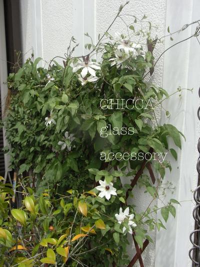 庭のこと_b0213347_22327.jpg