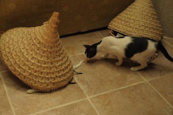 同じ猫だから、チョビとアビだから_e0066474_19202975.jpg