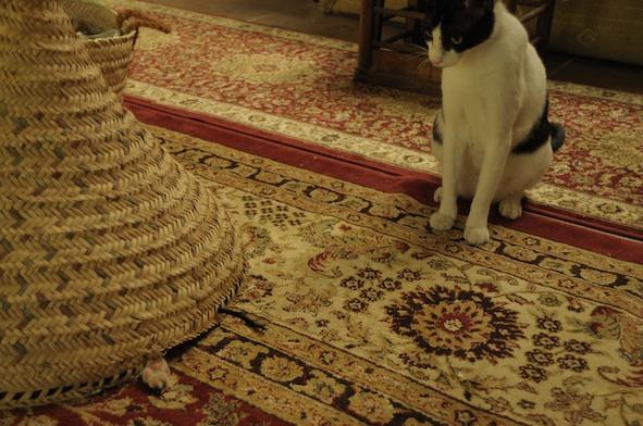 同じ猫だから、チョビとアビだから_e0066474_19211611.jpg