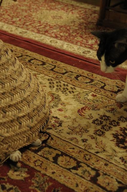 同じ猫だから、チョビとアビだから_e0066474_1921163.jpg