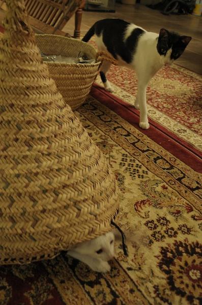 同じ猫だから、チョビとアビだから_e0066474_1921273.jpg