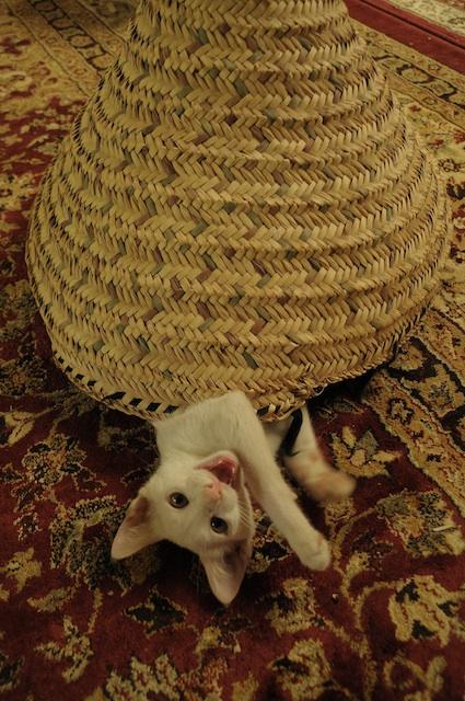 同じ猫だから、チョビとアビだから_e0066474_1925044.jpg