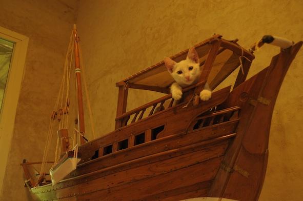 同じ猫だから、チョビとアビだから_e0066474_19262373.jpg