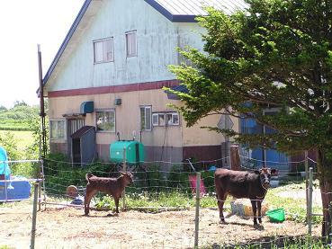役牛を飼う農家と町村農場_f0078286_7313771.jpg