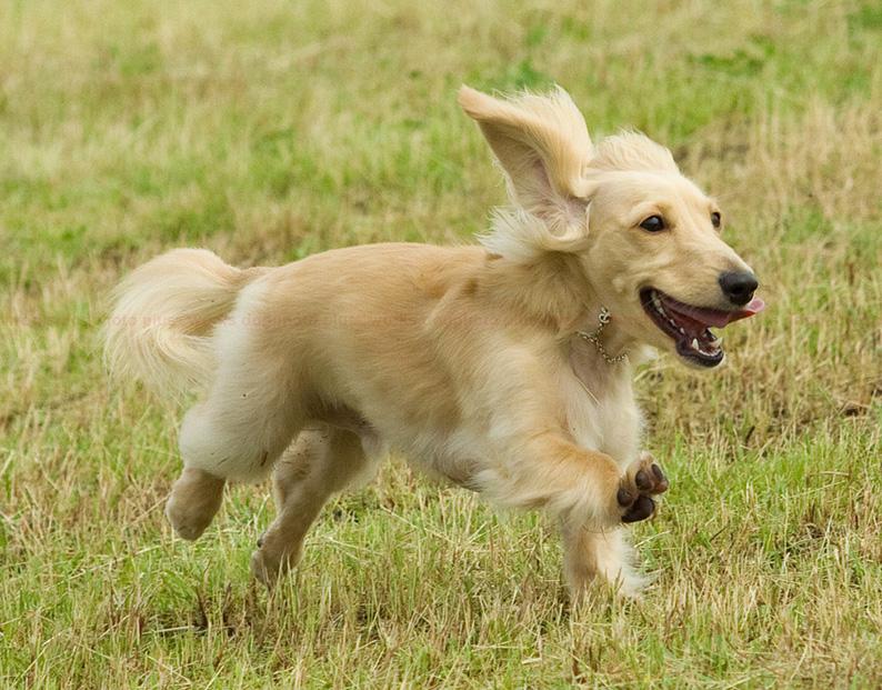 犬種見本のような・・_d0164190_14592585.jpg