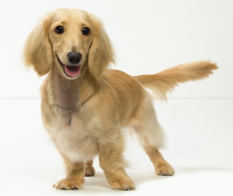 犬種見本のような・・_d0164190_14594046.jpg