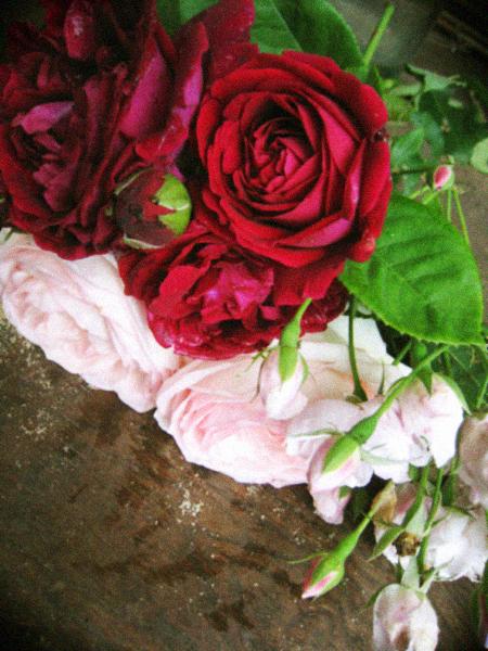 ナチュラルなつるバラの庭作り_d0077603_771964.jpg
