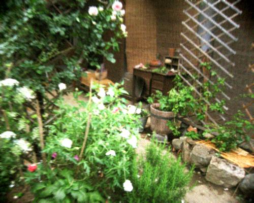 ナチュラルなつるバラの庭作り_d0077603_77833.jpg