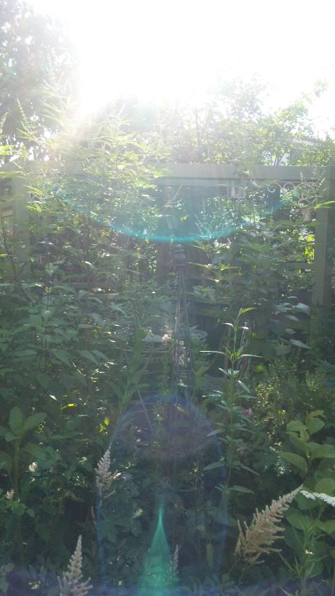 朝の庭_a0201829_716382.jpg