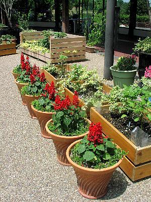 夏の花壇と緑のカーテン_c0141652_16592476.jpg