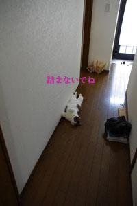 f0238772_14391416.jpg