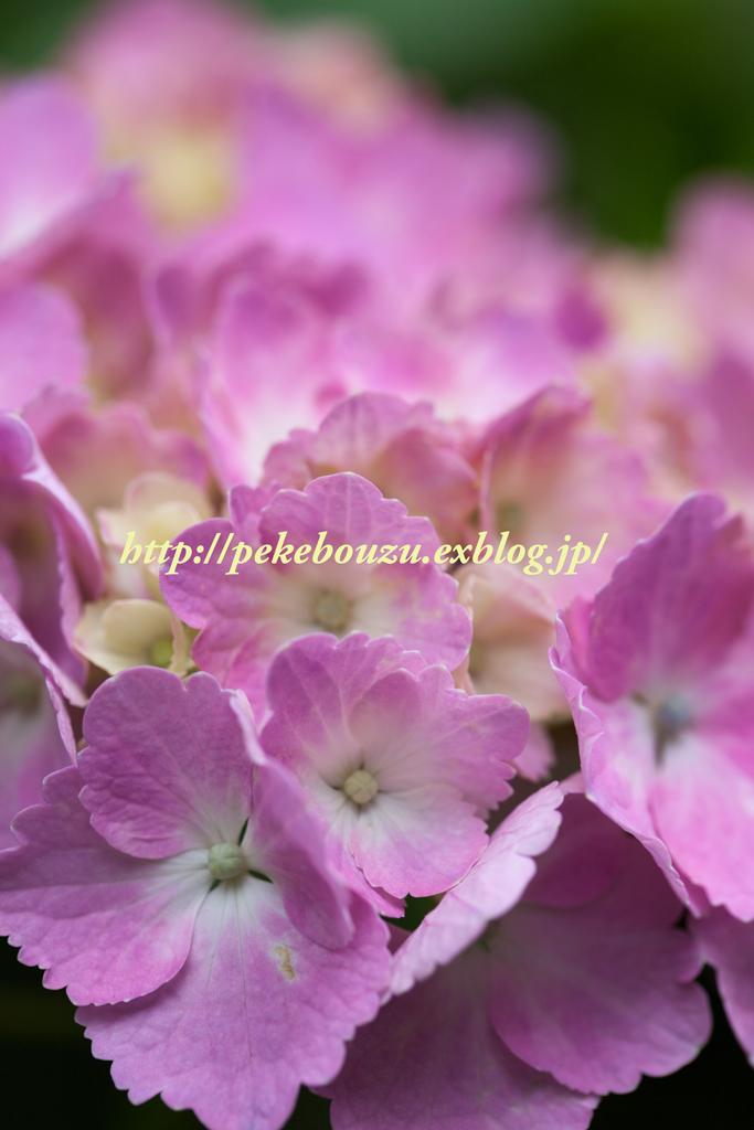 c0210275_21392759.jpg