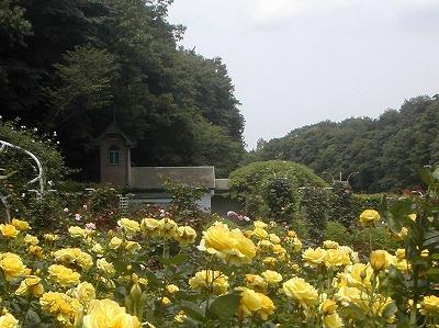 市川市動植物園_e0135287_12452411.jpg