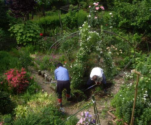 つるバラ(開花大株)の移植 2009~今年の開花へ♪_a0136293_16381455.jpg