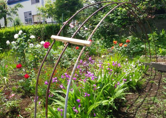 つるバラ(開花大株)の移植 2009~今年の開花へ♪_a0136293_17652.jpg