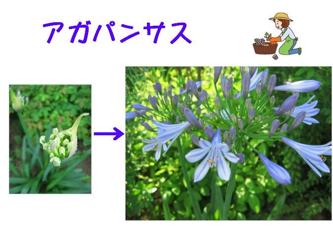 f0212993_1910251.jpg