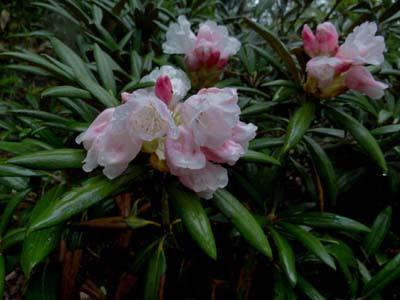 朝の花たち_e0120896_782469.jpg