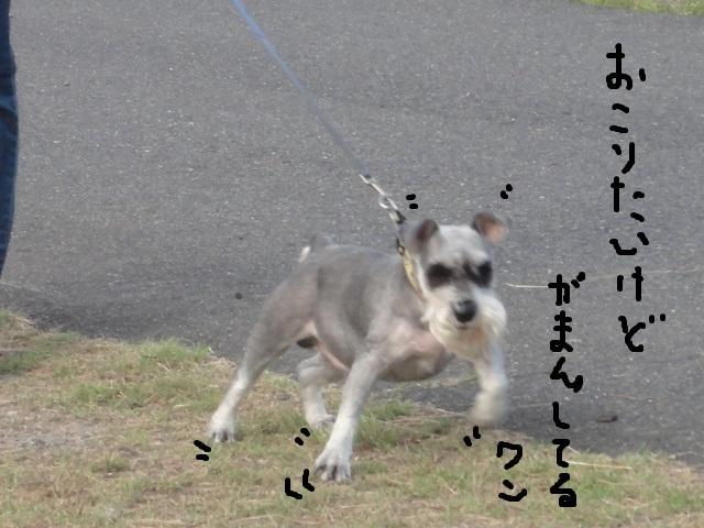 e0201009_22291127.jpg