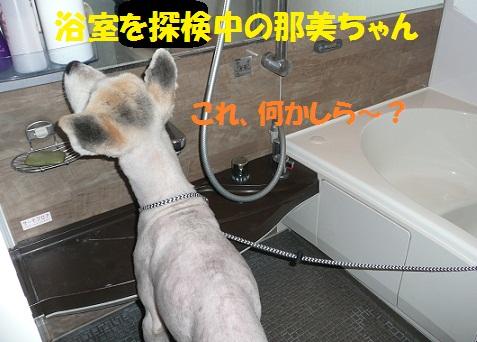 f0121712_22101327.jpg
