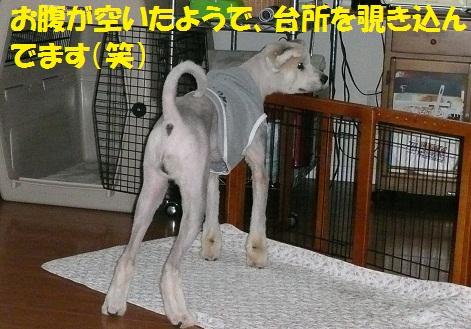 f0121712_22125726.jpg