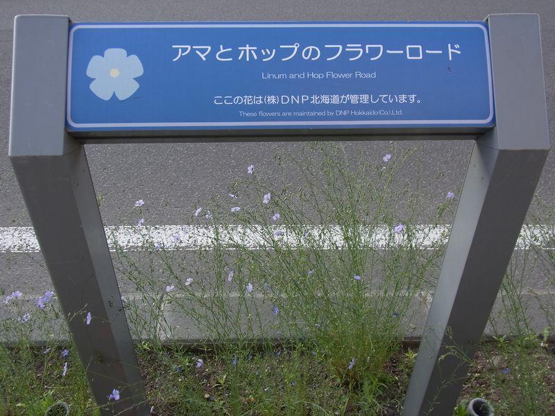 久しぶりの大通公園_c0025115_2124102.jpg
